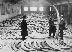 Room Full of Ivory
